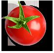 گوجه | tomato