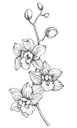 flower-ghazai sazmani