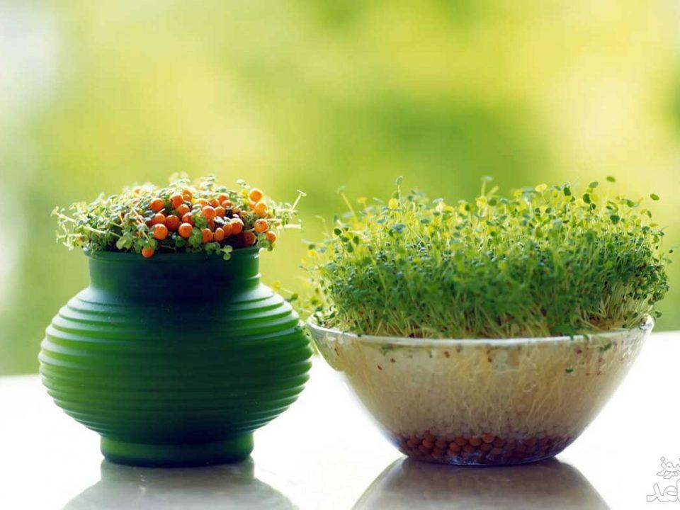 کاشت بذر انواع سبزه